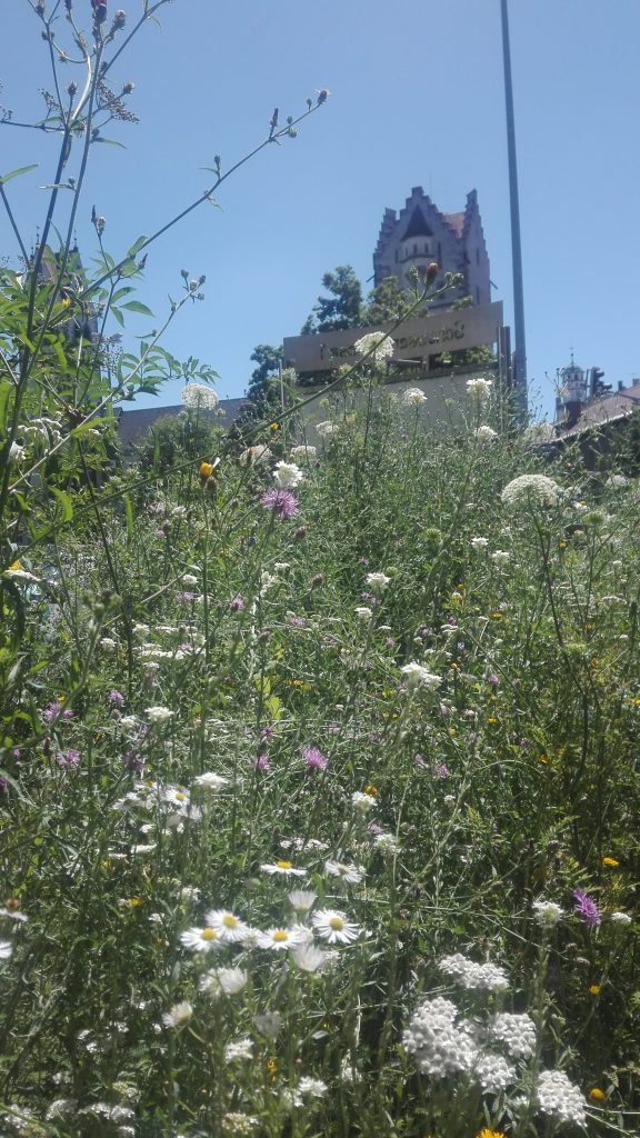 Blühender Landkreis für biologische Vielfalt direkt am Frauentorplatz